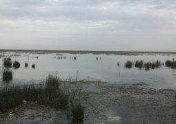 تالاب نیشکر خرمشهر به طور کامل تخلیه نمی شود