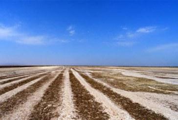 تالاب صالحیه در «البرز» خشک شد