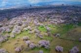 برای مالکان باغات سنتی قزوین باید انگیزه مالی ایجاد شود