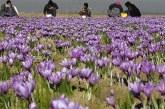 بازدید گردشگران خارجی از خراسان جنوبی به بهانه برداشت زرشک و زعفران