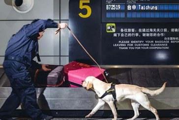 سگها برای کمک به جلوگیری از قاچاق میراث تاریخی و باستانی آموزش می بینند