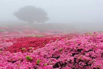فصل گل وگلاب