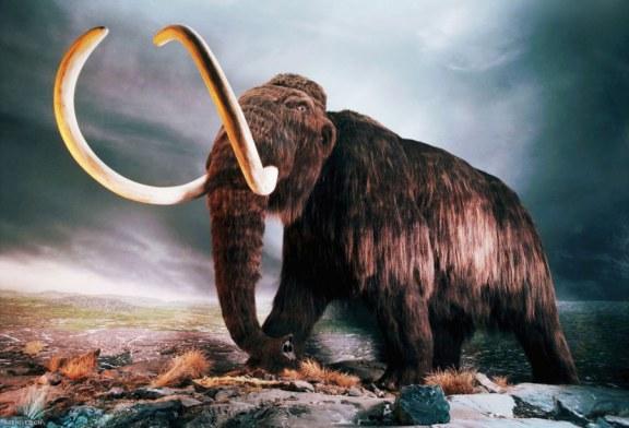 دو فسیل دو میلیون ساله در ایران کشف شد