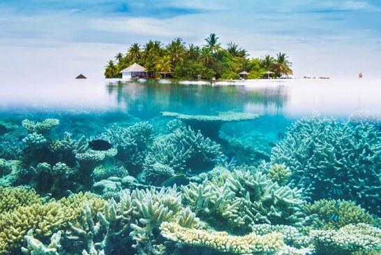 همه چیز درباره مالدیو