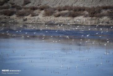 گلستان پذیرای هزاران پرنده مهاجر