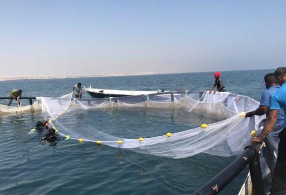 موانع«پرورش ماهی در قفس»در خوزستان/موافقان و مخالفان چه میگویند؟