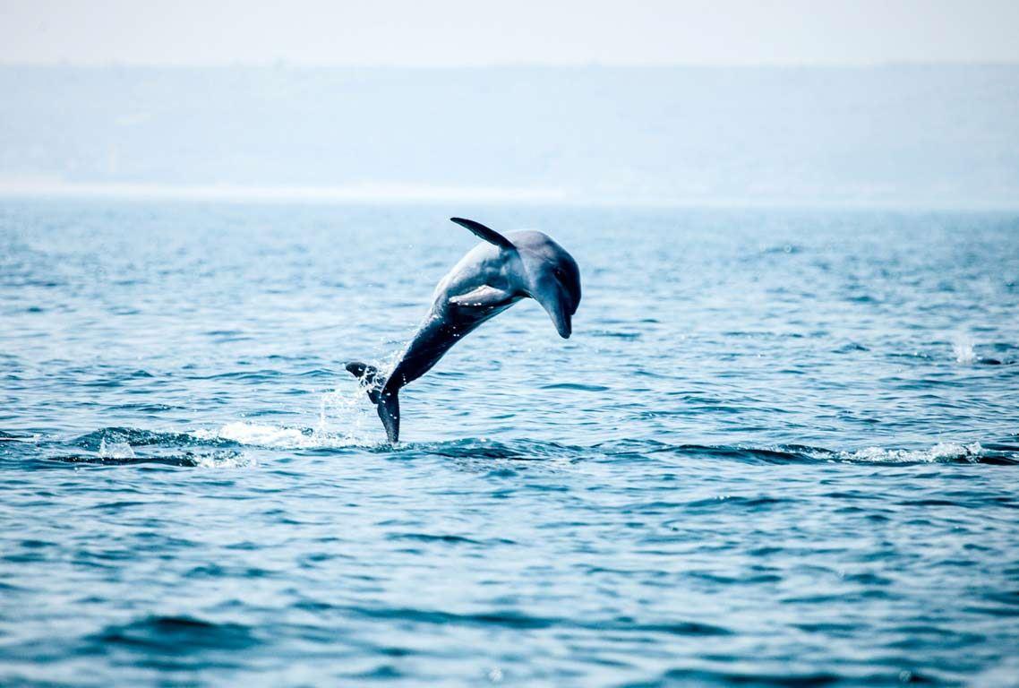 دلفین ها در جزیره هنگام
