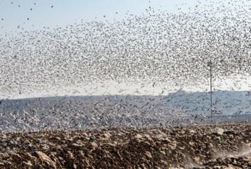 زبالهدانها، مکانی برای تجمع پرندگان