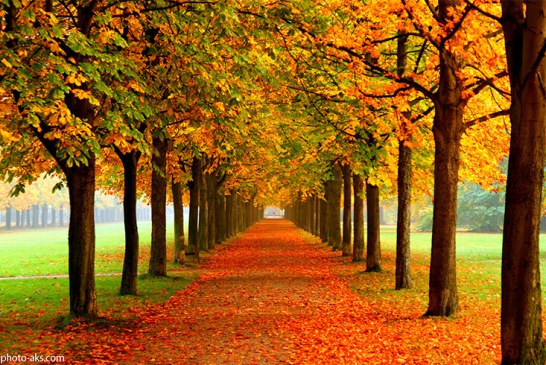 پاییز را در جنگل النگدره لمس کنید